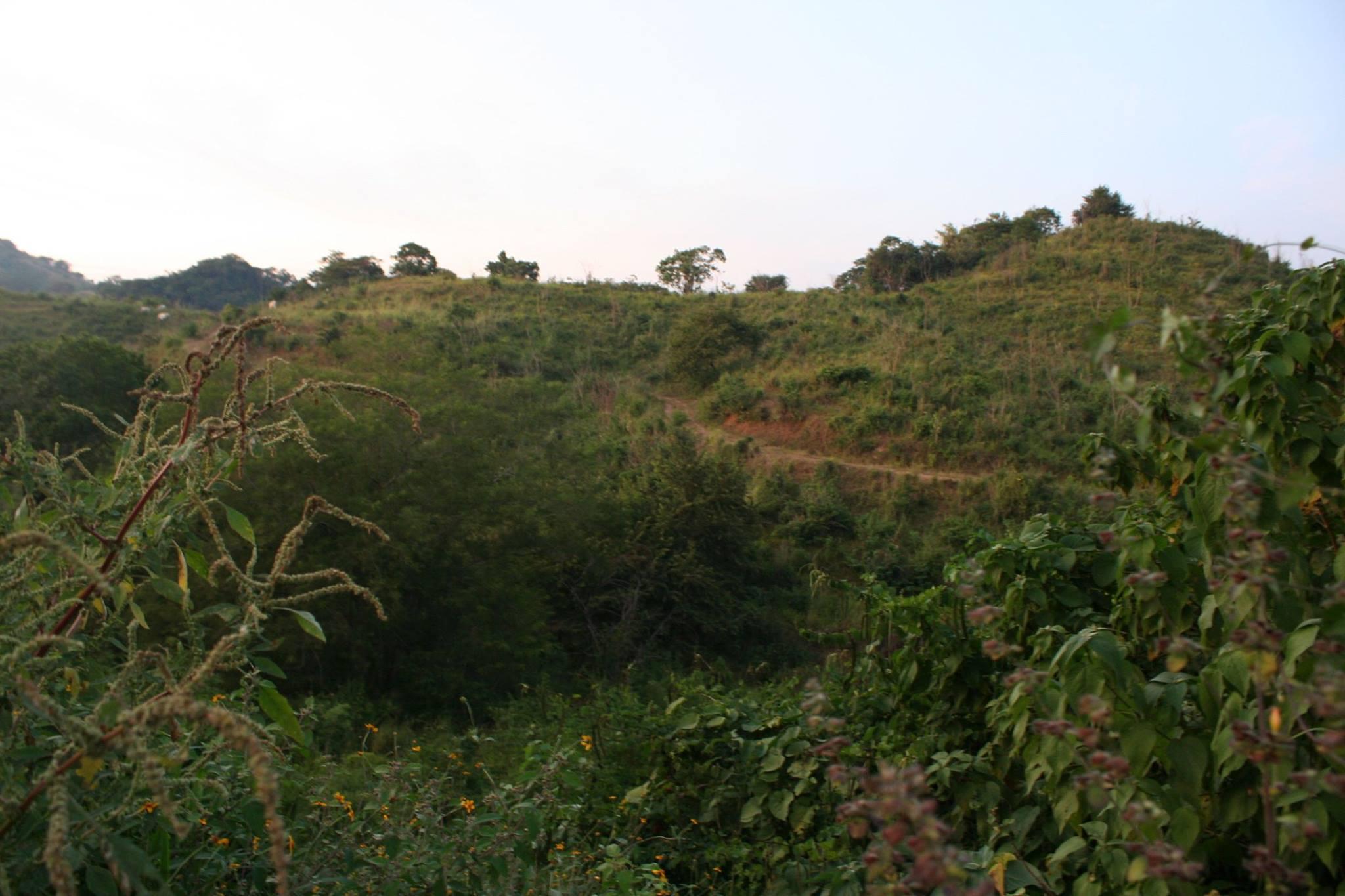 Brachypelma baumgarteni
