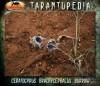 CeratogyrusbrachycephalusBurrow2.jpg