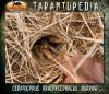 CeratogyrusbrachycephalusBurrow5.jpg