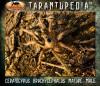 CeratogyrusbrachycephalusMatureMale3.jpg