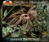 Ceratogyrusbrachycephalus.jpg