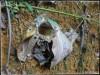 OrnithoctonusaurotobialisBurrow.JPG