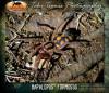hapalopusformosus.jpg